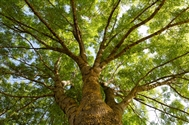 Greater efforts to protect Britain's trees