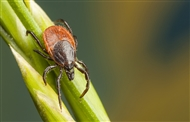 Walk skills: how to deal with ticks and midges