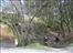 Forestry fiasco & climbing